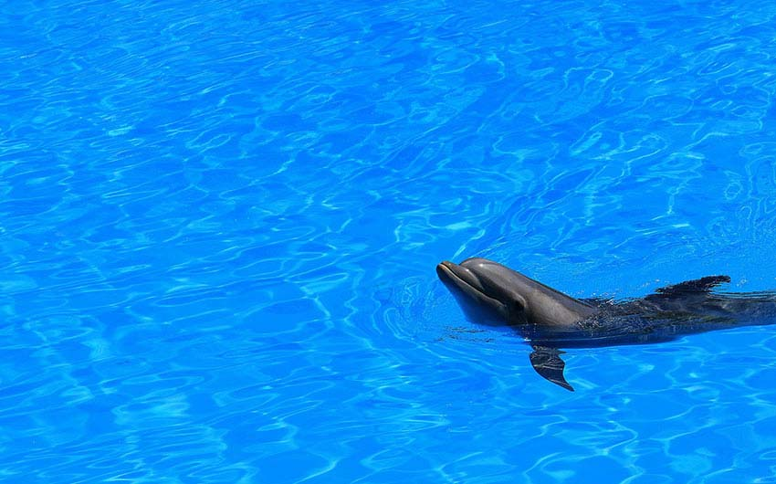 Dolphin in Tenerife with The Little Voyager