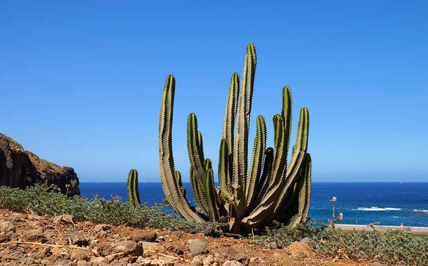 Agrave - Tenerife with The Little Voyager