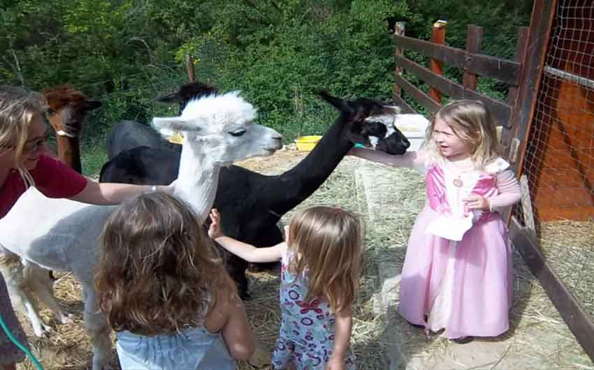 Kids playing with Alpacas at The Little Voyager's Umbrian Cottages