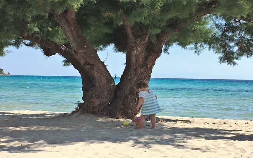 Sani Beach Tree with The Little Voyager