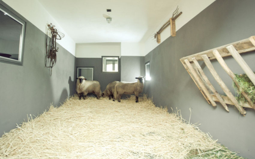 German Farmhouse Sheep Herd with The Little Voyager