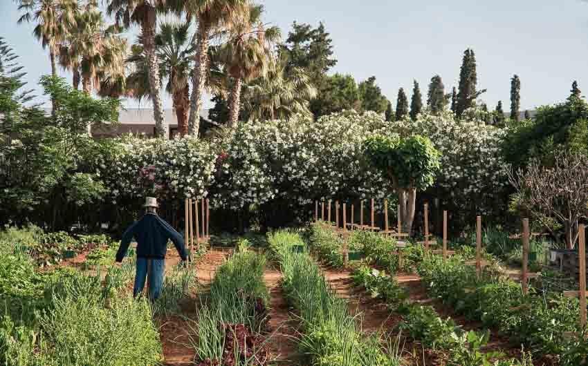 Cretan Nature Resort Herb Garden with The Little Voyager