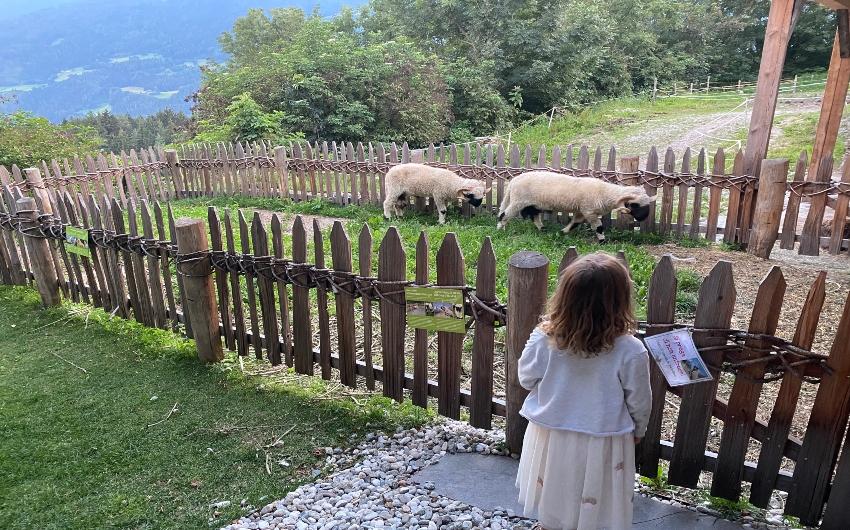 Girl looking at sheep at petting zoo at the South Tyrolean Panorama Retreat